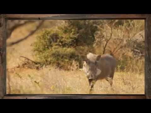 Warthog - African Sky