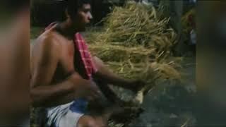 পাথুরিয়া ঘাটা বড় কালী মা র কাঠামো পুজো ২০২০