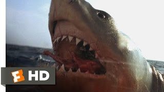 Jaws: The Revenge (3/8) Movie CLIP - You Got 'Im (1987) HD