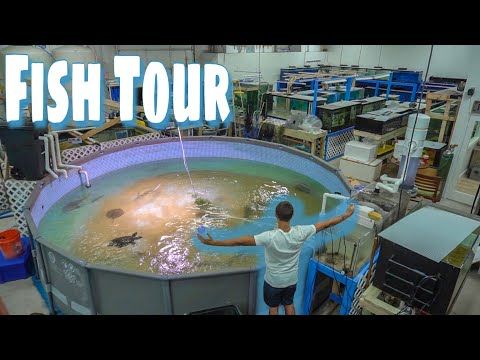 HUGE Fish STORE TOUR!!!