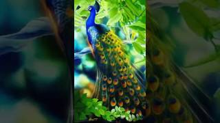 Good Morning | Peacock (gif)