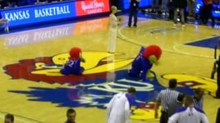 Kansas Jayhawks - Big Jay and Little Jay running in circles KU