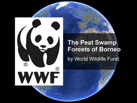 WWF: Peatland Swamps of Borneo
