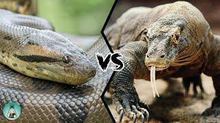 ANACONDA VS KOMODO DRAGON - Who Would Win?