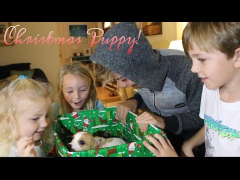 Christmas Puppy Surprise - Kids Unbox Our New Puppy -