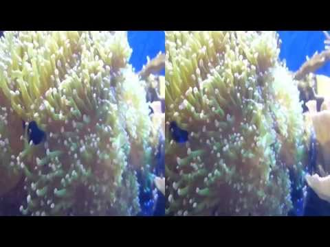 Zoanthid Corals and Underwater Plants 3D(YT3D:Enable=True)