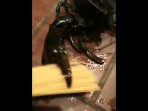 lobster crush