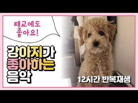 [광고X] 강아지가 좋아하는 음악 / puppy favorite music 犬の好きな音楽