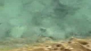 モルディブの海1