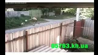 Uzeo je kanister i njime krenuo da udara dva pitbula na ulici. Bila je to najveća greška koju je napravio! (VIDEO)
