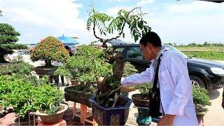 Đi xem cây hàng chợ, đánh giá sơ bộ về những cây khu vực này