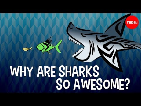 Why Are Sharks So Awesome?
