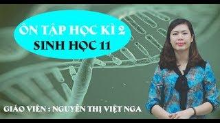 Ôn tập học kỳ II – Môn Sinh học lớp 11 – cô Nguyễn Thị Việt Nga