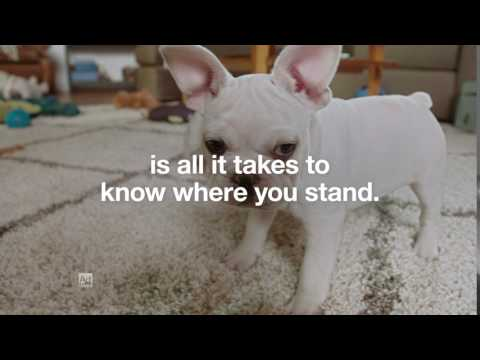 Risk Test Puppies :10 | Type 2 Diabetes Prevention | Ad Council