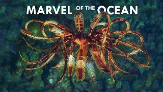 Feather Stars are the most Mesmerizing Creatures in the Ocean
