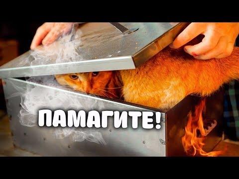 КОТ В КОПТИЛЬНЕ! (Очень простой дачный рецепт сочного и вкусного мяса свежепойманной щуки!)