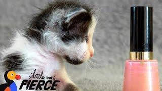 Watch This Micro-Mini Kitten Grow Up - THUMBELINA | The Dodo Little But Fierce