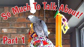 Einstein Parrot has so much to talk about Part 1