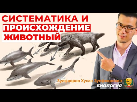Систематика и происхождение животных