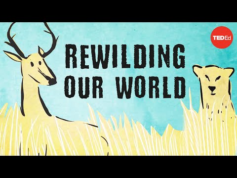 From the top of the food chain down: Rewilding our world - George Monbiot thumbnail