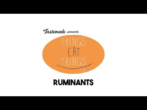 Ruminants Eat Things 360º VR Experience | Tastemade Hors d'oeuVRes