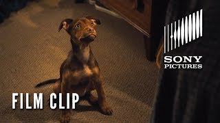 """A DOG'S WAY HOME Clip - """"It was Love"""" (In Theaters Tomorrow)"""