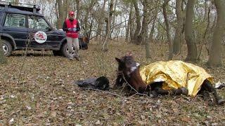 Konj je godinama bio vezan, a onda je veterinar izvukao krvavi lanac iz njegove glave. Njegova reakcija govori sve!