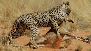 /the most dangerous predators on earth wild animals documentary hd