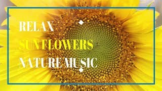 Relaxing Nature  Sunflowers music and nature sounds asmr