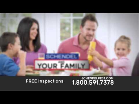 Let Schendel Pest Protect Your Home, Family and Business from Pests