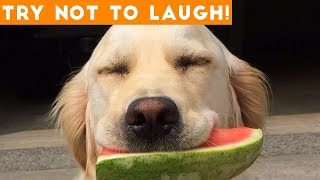 Try Not To Laugh Funniest Animal Compilation October  2018 | Funny Pet Videos - YouTube