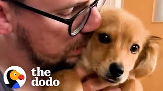 Shy Foster Puppy Cuddles With Her Dad For The First Time | The Dodo Foster Diaries
