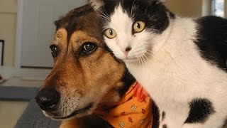 Funny Cats and Dogs Compilation - YouTube