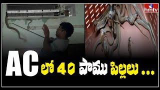 Shocking!! Farmer finds 40 baby snakes in AC, scary..