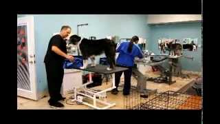 Pet Grooming School