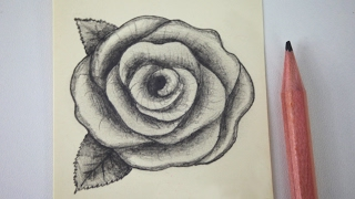 How to draw a rose - free art lesson