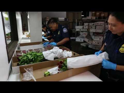 DFN: CBP Flower Inspection B-Roll, LOS ANGELES, UNITED STATES, 02.12.2018
