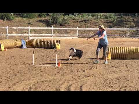 Libby #17-11216 Blue Novice Barrelers