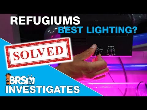 What does it take to light a refugium effectively? | BRStv Investigates