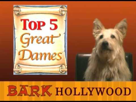 Bark Hollywood - Episode 8