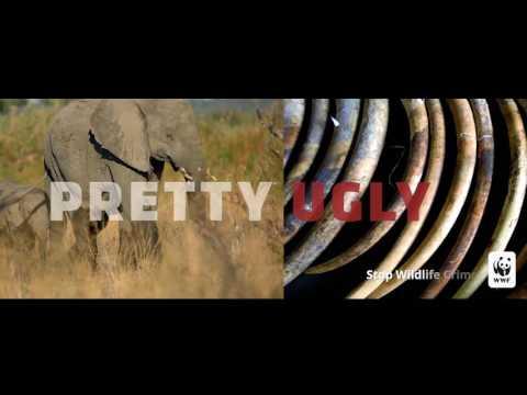 Pretty Ugly: Wildlife Crime