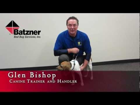 Glen and Hunter, Batzner's Bed Bug Dog