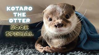 【50万人記念】これを見ればカワウソコタローの全てがわかる最強保存版! 500K SUB SPECIAL Introducing Kotaro the Otter
