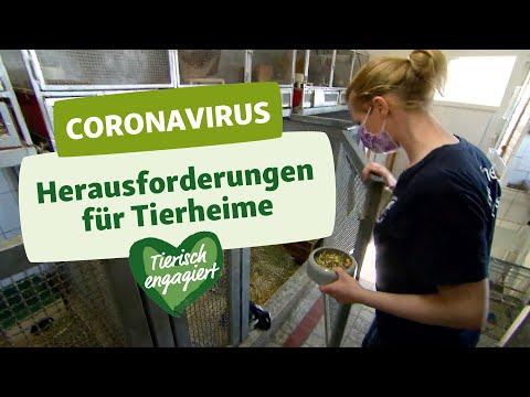 """Initiative """"Tierisch engagiert"""": Aktuelle Herausforderungen im Tierheim Moers"""