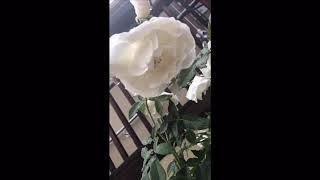 Relaxing Deep Sleep Music❤️🐥💤 - YouTube