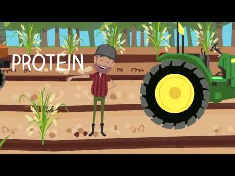 Forarbejdning af korn