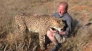Butt Scratch Reflex Responses From BIG & small Cats | Lions Leopards Cheetahs Servals Caracals