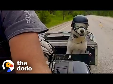 Motorcycle-Loving Senior Husky Get His Own Sidecar | The Dodo Soulmates