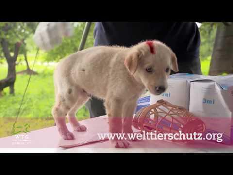 Coronakrise: WTG-Nothilfefonds für Tierschutz