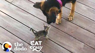 Stray Kitten Picks A Dog As Her Mom | The Dodo Cat Crazy